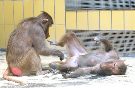 Aus dem Affenhaus im Frankfurter Zoo Archivbild  © Diether v. Goddenthow
