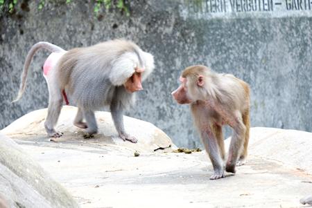 Frankfurter Zoo öffnet wieder seine Tore.© Foto Diether v. Goddenthow
