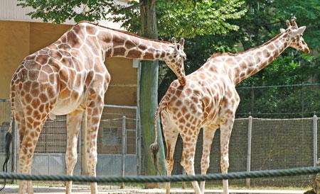 Frankfurter Zoo © Foto: Diether v. Goddenthow
